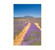 Bridstowe Lavender Farm Art Print