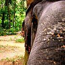 elephant by ezebee