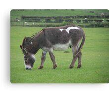 Donkey.  Canvas Print