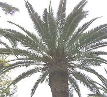 Palm tree.  by ccrcats