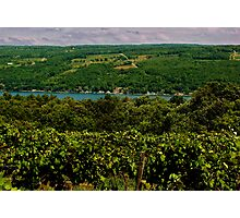 Keuka Lake Grape Vineyard Photographic Print