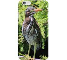 Little Green Heron  iPhone Case/Skin