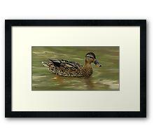 Mallard Hen I 2007 Duck Series Framed Print