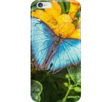 Blue Morpho iPhone Case/Skin
