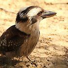 Kookaburra.  Wattamolla, Royal National Park, Sydney, NSW by Mandy Gwan