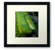 Wet scales. Framed Print