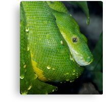 Wet scales. Canvas Print