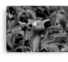 Garden Bloom - B&W version Canvas Print
