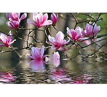 Japanese Magnolia in Water Photographic Print