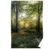 Forest Light Poster