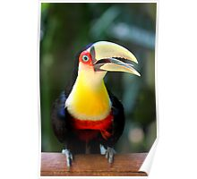 Red Breasted Toucan at Iguassu, Brazil  Poster