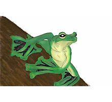 Frog Photographic Print