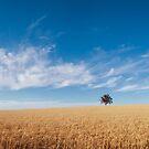 harvest Summer by dan  stewart