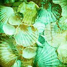 scallop shells by HelenAmyes