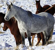 Mustangs by Gene Praag