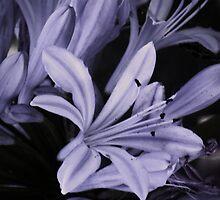 Purple by KellieBee