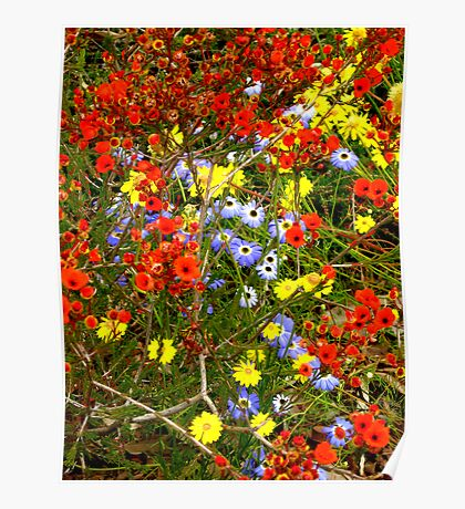 Kings Park Wild Flowers Poster