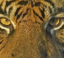 Sumatran tiger Sticker
