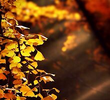 Color me yellow by DerekEntwistle