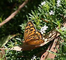 Winged Beauty II by saharabelle