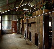 Old Shearing Shed by GailD