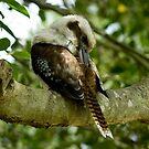 Preening Kookaburra II by Gayle Shaw