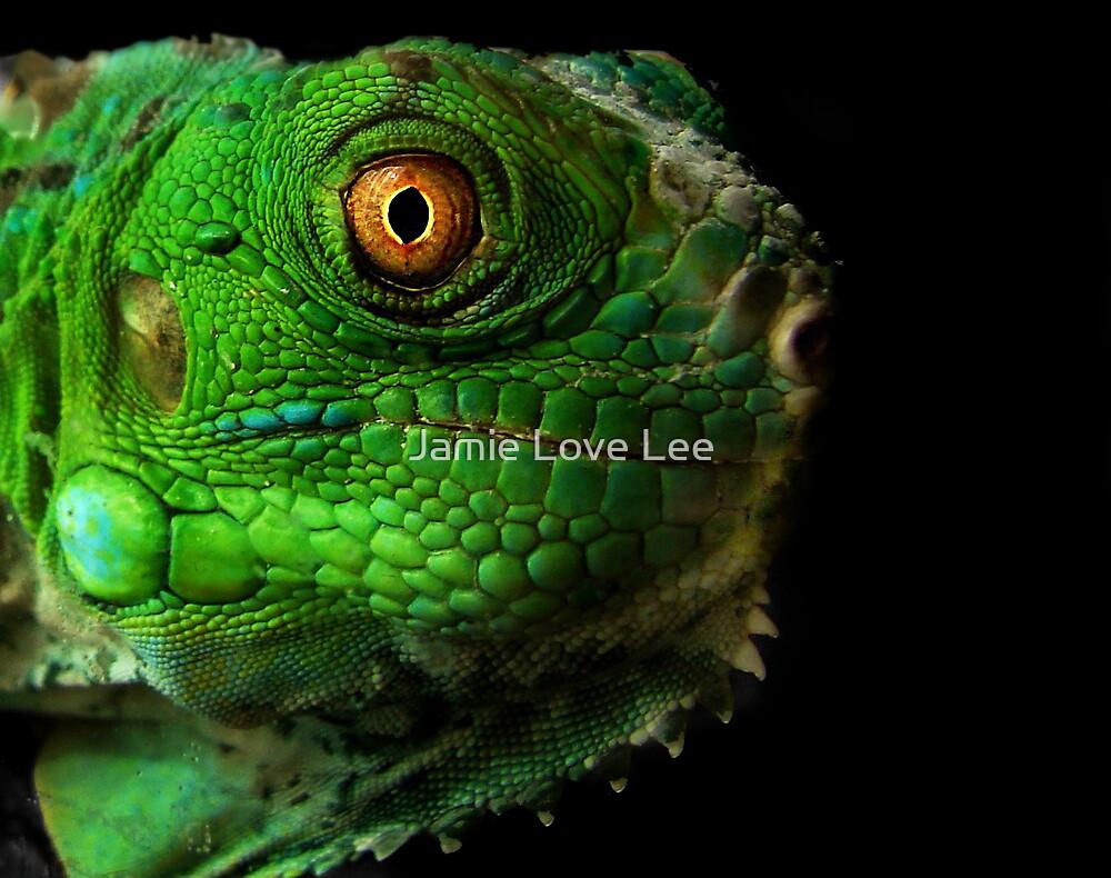Iguana by Jamie Lee