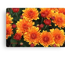 Fall Faces ~ Rust Color Button Mums Canvas Print