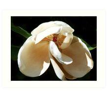 Another Magnolia Art Print