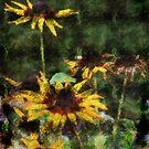 Blackeyed Susans by kalliope94041