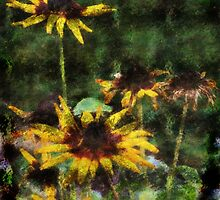 Blackeyed Susans by kalliope94041