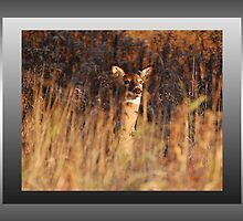 The Fawn-Giraffe in Search of the Dog-Fawn River :) by TerriRiver
