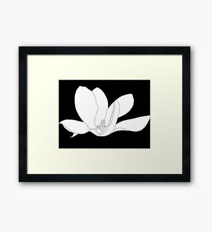 Magnolia 200 BW Drawing Framed Print