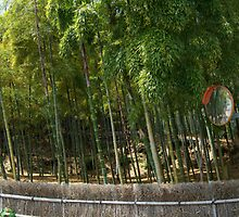 Roadside bamboo in Kyoto by Craftymizz