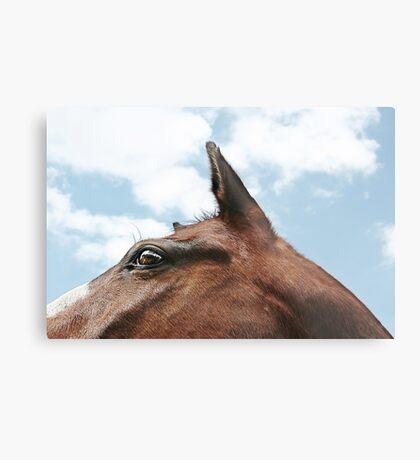equine mountain Metal Print
