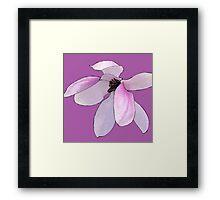 Magnolia 3337 colour square Framed Print