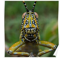 Elegant Grasshopper Close Up Poster
