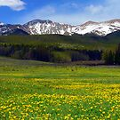 Golden Mountain Meadow by Tony L. Callahan