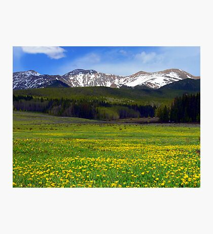 Golden Mountain Meadow Photographic Print
