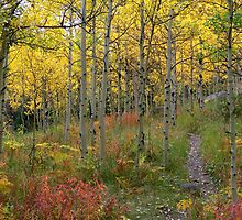 Aspen Forest Trail by Tony L. Callahan