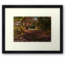 Autumn Glade Framed Print