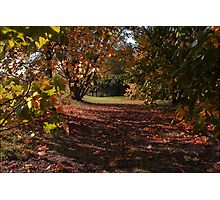 Autumn Glade Photographic Print