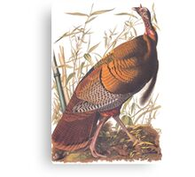 Audubon Wild Turkey Canvas Print