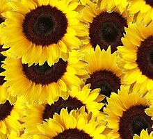 Sunflowers by Abstractionz