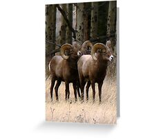 Big Horn Sheep Rams #1 Greeting Card