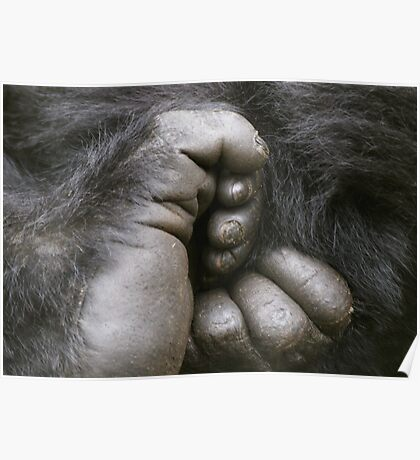 Gorilla Feet Poster