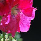 Hollyhock in the Spring by Lozzar Flowers & Art