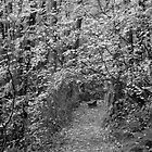 beckoning path by Bruce  Dickson