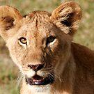 Lion Cub by Steve Bulford