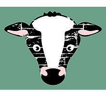 Cute Cow Face Photographic Print